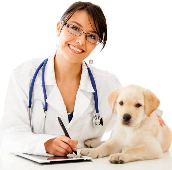 HIGHLANDS VETERINARY GROUP - Adwords Guide