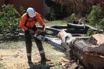 Full Tree Service  Stump Removal - Adwords Guide