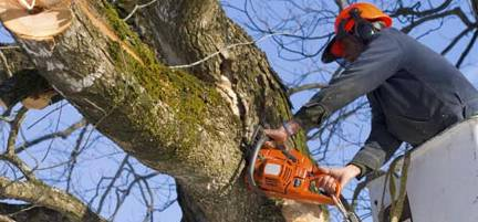 Lennox Head Tree Care - Adwords Guide